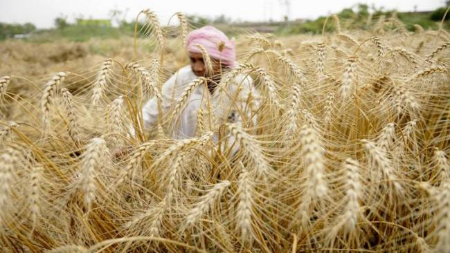 Cabinet Approves Proposal To Hike MSP On Rabi Crops - Sakshi