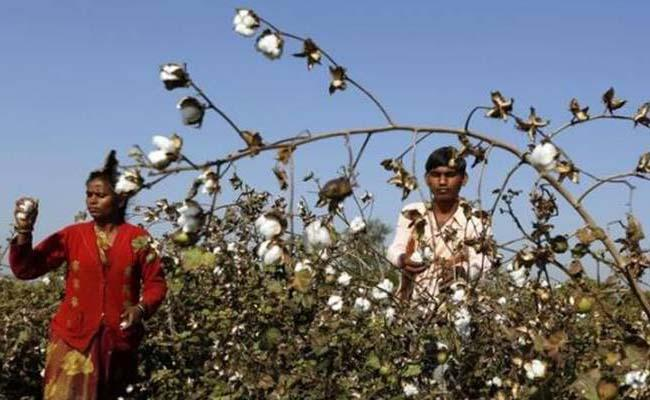 Cotton Purchase Centers Should Be Established - Sakshi