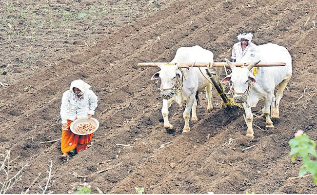 Government Policies Are Noun About Agriculture And Farmers - Sakshi