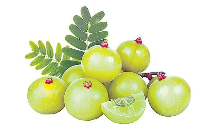 It is necessary for health to be followed in accordance with six seasons - Sakshi