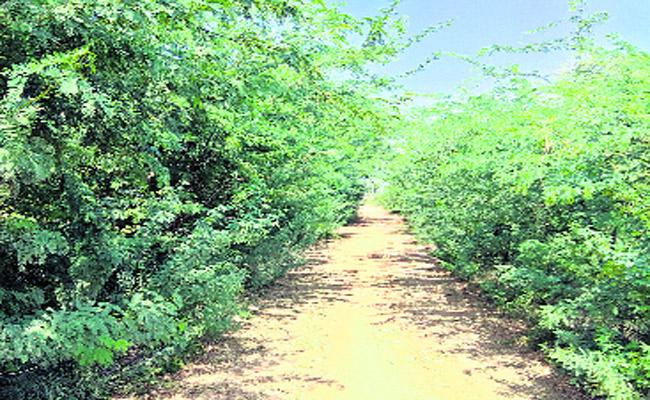 Kummari Gudem Villagers Facing Problems In Kanagal Mandal - Sakshi