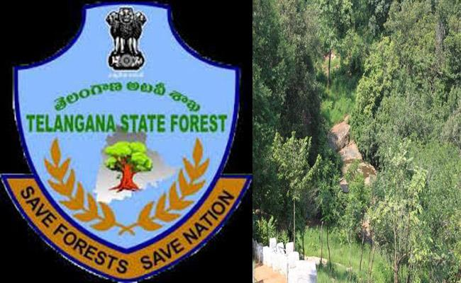 What's Going In Forest Department? - Sakshi