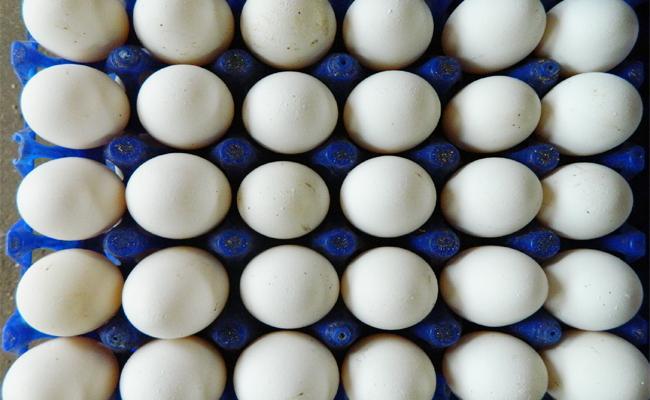 Eggs Supply Stops In East Godavari Schools - Sakshi