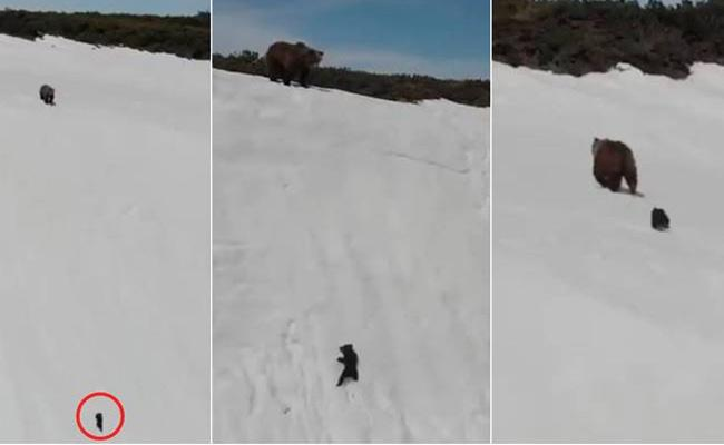 Bear Cub is Struggle to Climb Up a Snowy mountain Gives Lesson - Sakshi