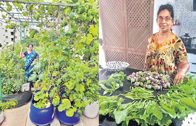 Cultivating home crops - Sakshi