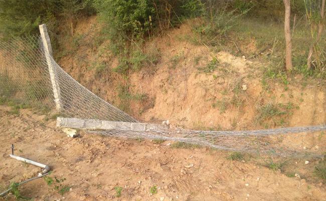 Elephant Attack on Crops Chittoor - Sakshi