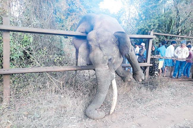 Elephant gets stuck in railway fencing while fleeing villagers in Karnataka - Sakshi