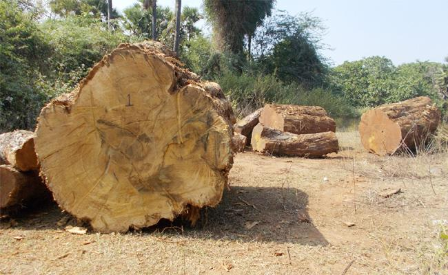 Wood Smuggling In East Godavari - Sakshi