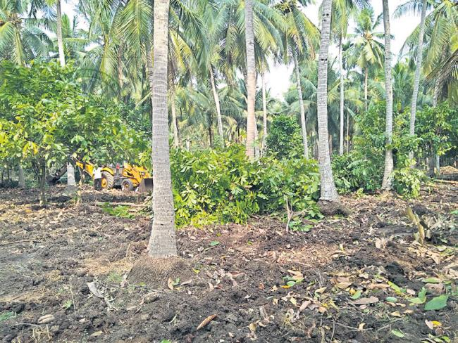 organic farming on coconut crop - Sakshi