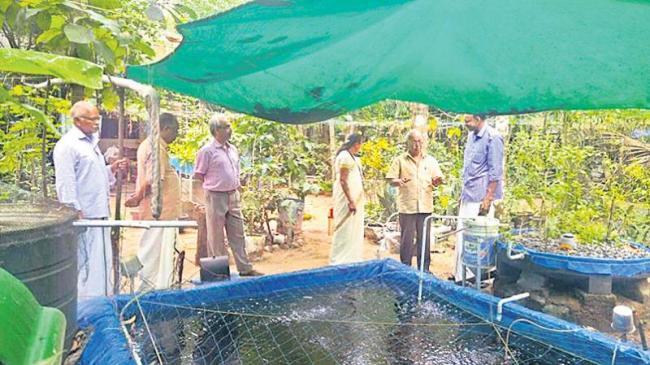 Organic vegetable and aquaculture - Sakshi