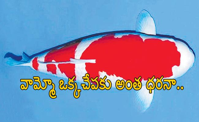 World most expensive Fish Gets Record Rate - Sakshi