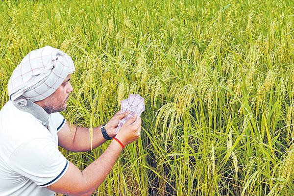 Farmers income is two and a half times - Sakshi