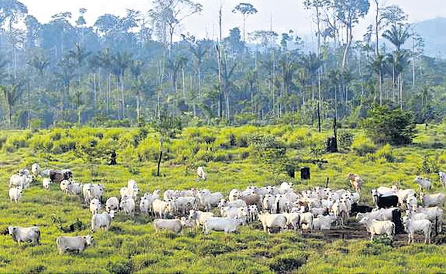 People Should Reduce Meat And Milk Consumption - Sakshi