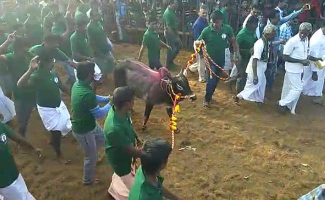 Jallikattu Celebrations At Chittoor District - Sakshi