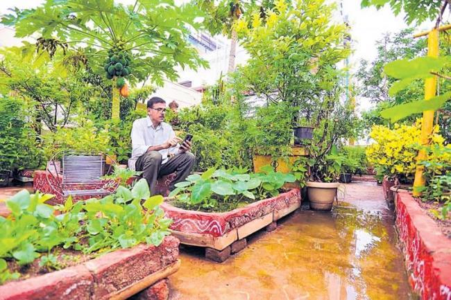 Gardening for biodiversity - Sakshi