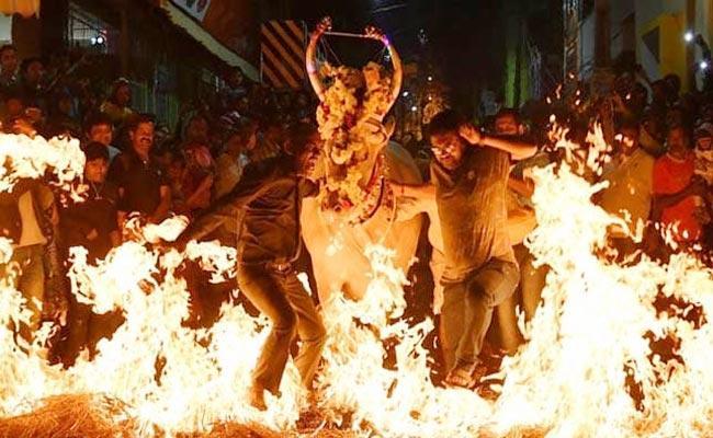 Cows Walking Over Burning Hay As Part Of Sankranti Celebrations In Bengaluru - Sakshi
