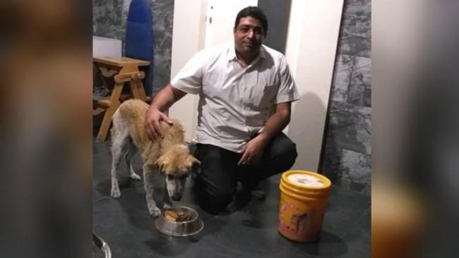 In Pune Dog saves Doctor Life - Sakshi