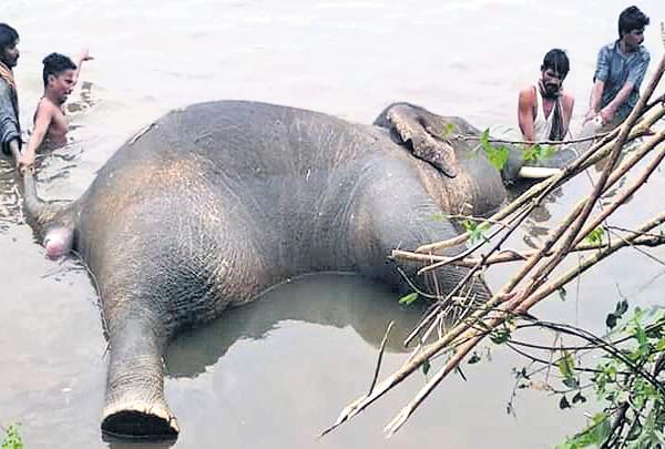 Another elephant dies in Nagavali River - Sakshi