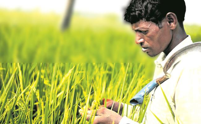 TS Government Plan To Register Details Of Farmers In Online - Sakshi