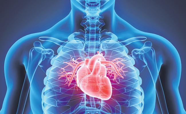 Fiber, bacteria Good for heart ? - Sakshi