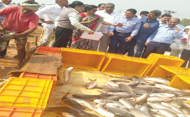 West Godavari Fish Ban in Bihar - Sakshi