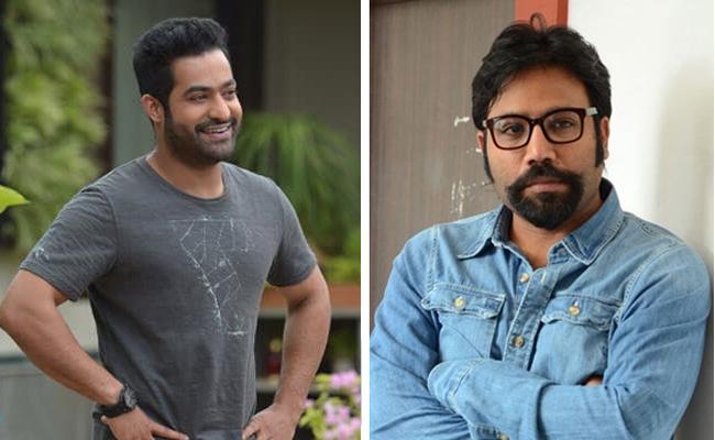 Jr Ntr Next Movie With Sandeep Reddy Vanga - Sakshi