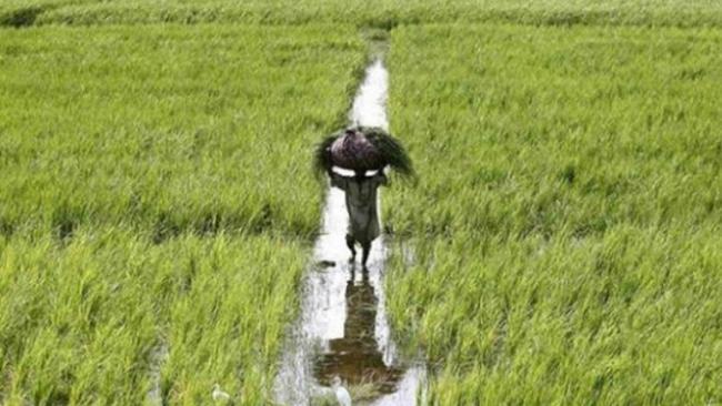 Piyush Goyal Announces Farmers Benefit Scheme - Sakshi