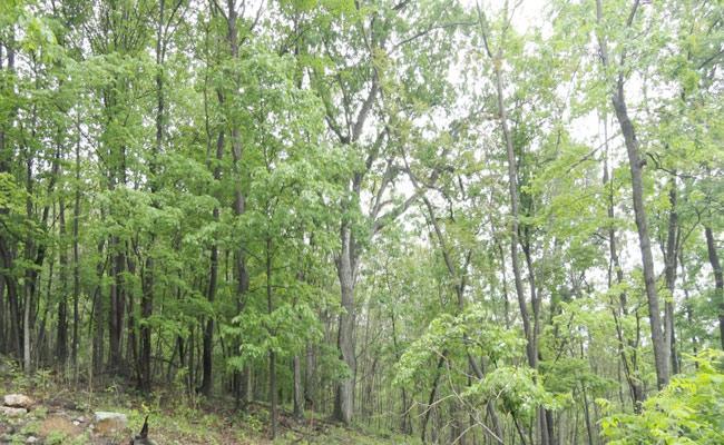 Article On Tree Plantation In Telangana - Sakshi
