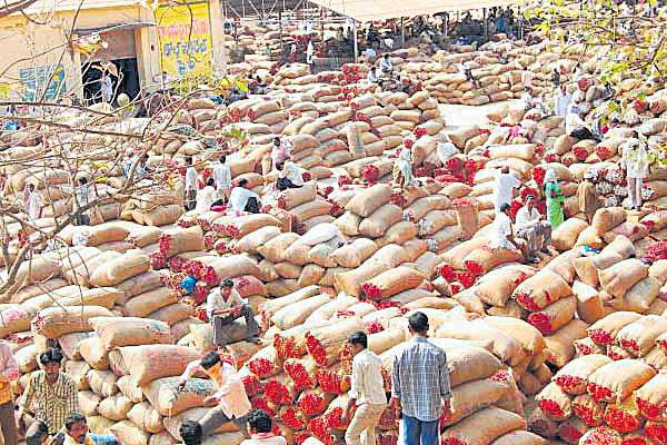 Mirchi farmers cheated by the brokers - Sakshi