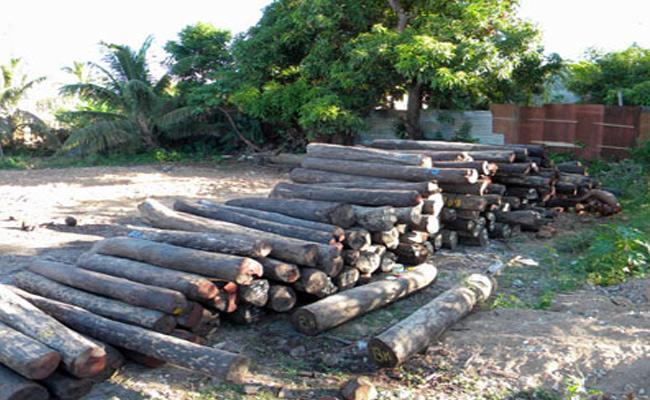 Teak Wood Smuggling Gang Arrested Khammam Police - Sakshi
