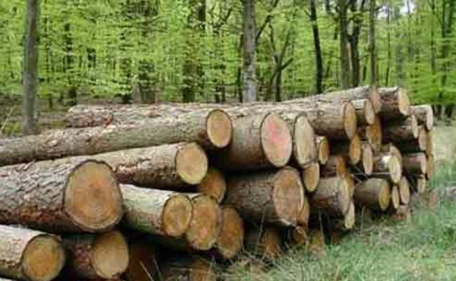 Wood Smuggling Police PD Act Cases Nalgonda - Sakshi