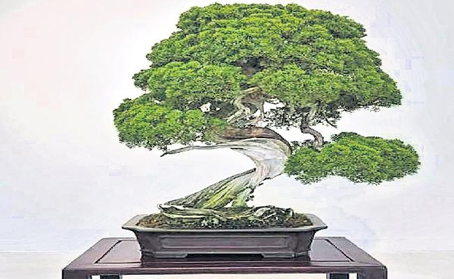 Four Hundred year Old Bonsai Tree Stolen In Japan - Sakshi