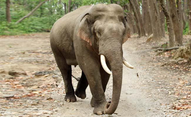 Indian Family Feeds Bananas to Elephant who Knocked The Door - Sakshi