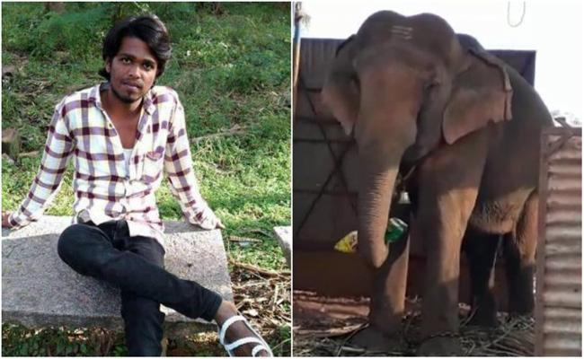 Elaphant Attack on Man in Karnataka - Sakshi