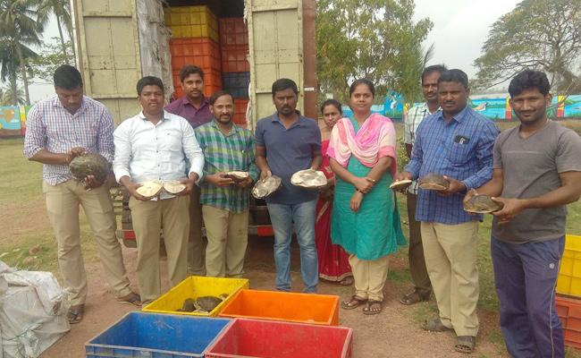 Turtles Smuggling in Vijayawada - Sakshi
