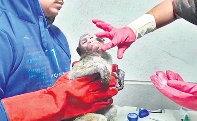 Injured monkey saved by auto drivers in Mumbai - Sakshi