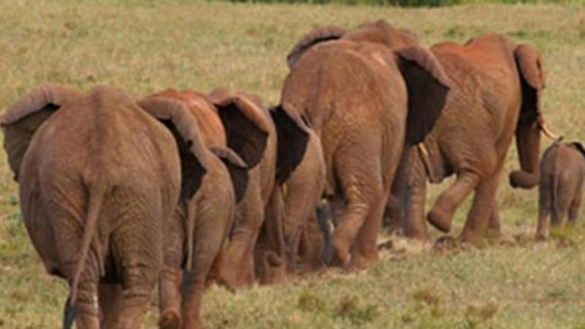 In West Bengal Elephant Protects 4 Years Girl Stay Her In Between Legs - Sakshi