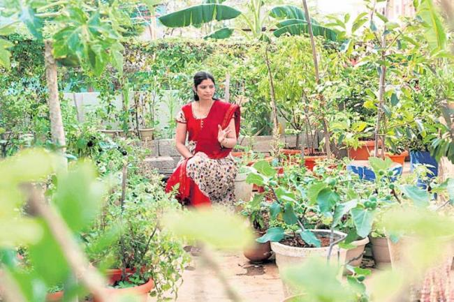 There is no need for shadenet for homecrops - Sakshi