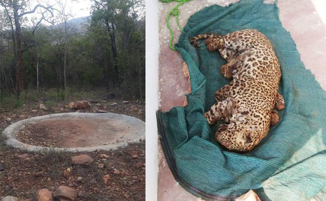 Wild Animals Died With Water Shortage in Forest - Sakshi