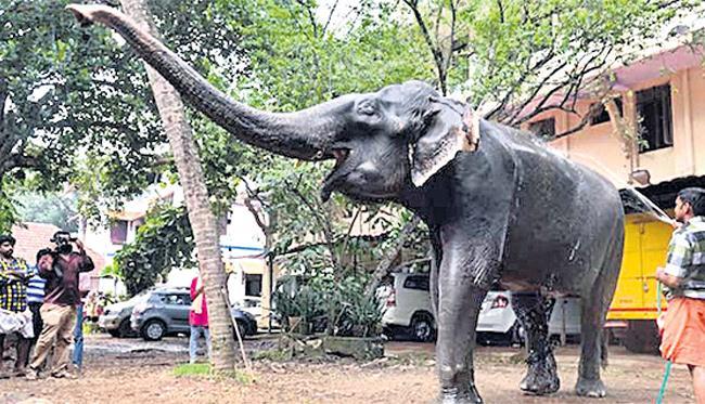 oldest elephant Dakshayani dies in Kerala - Sakshi
