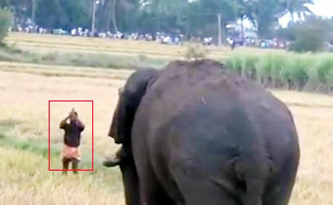 Farmers Suffering With Elephants Attack in Tamil Nadu - Sakshi