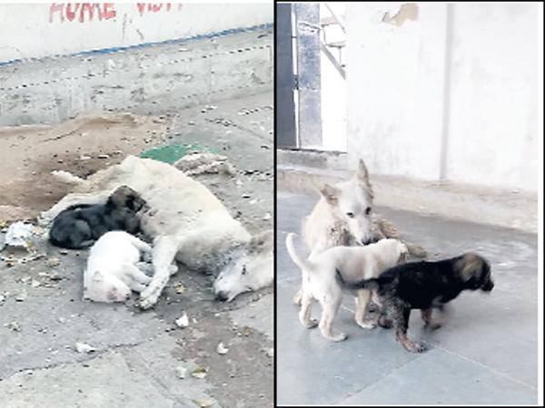 Mother Dog And Puppies Are Safe - Sakshi