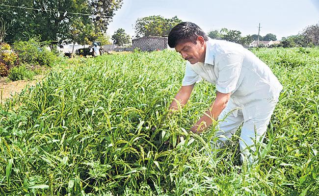 Other Crops in Orange Garden - Sakshi