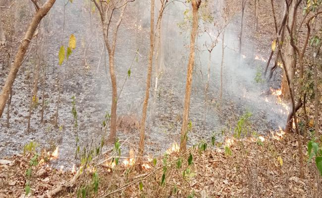 Fire In The Bhupalpally Forest - Sakshi