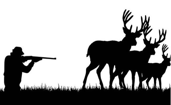 Animals Death in Forest - Sakshi