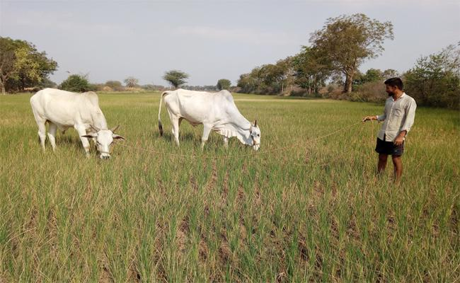 Water Problems For Fields In Warangal - Sakshi