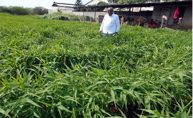 Millets Constitutes  Health And Wealth - Sakshi