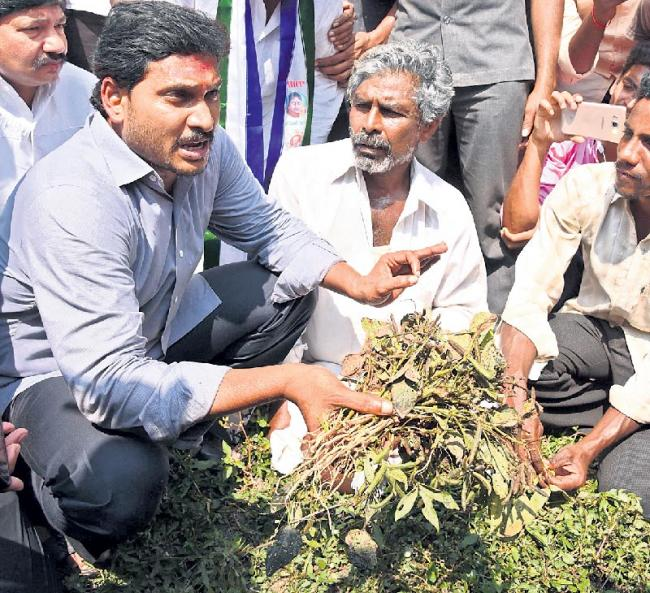 ys jagan given guarantee to crop insurance - Sakshi
