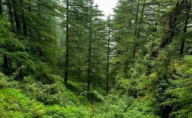 Article On Forest Smugglers In Telangana - Sakshi