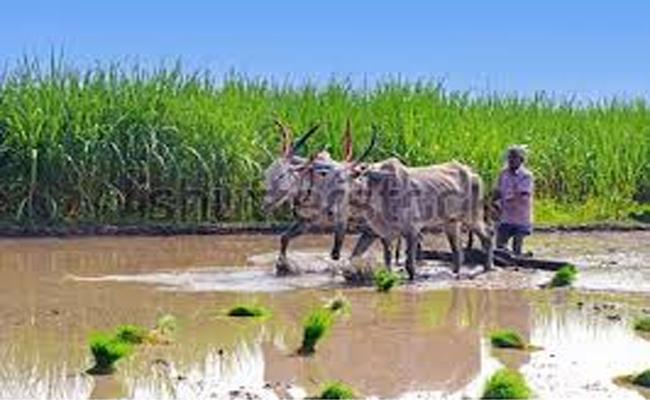 Telangana Governament  Ready  For Another Comprehensive Survey - Sakshi